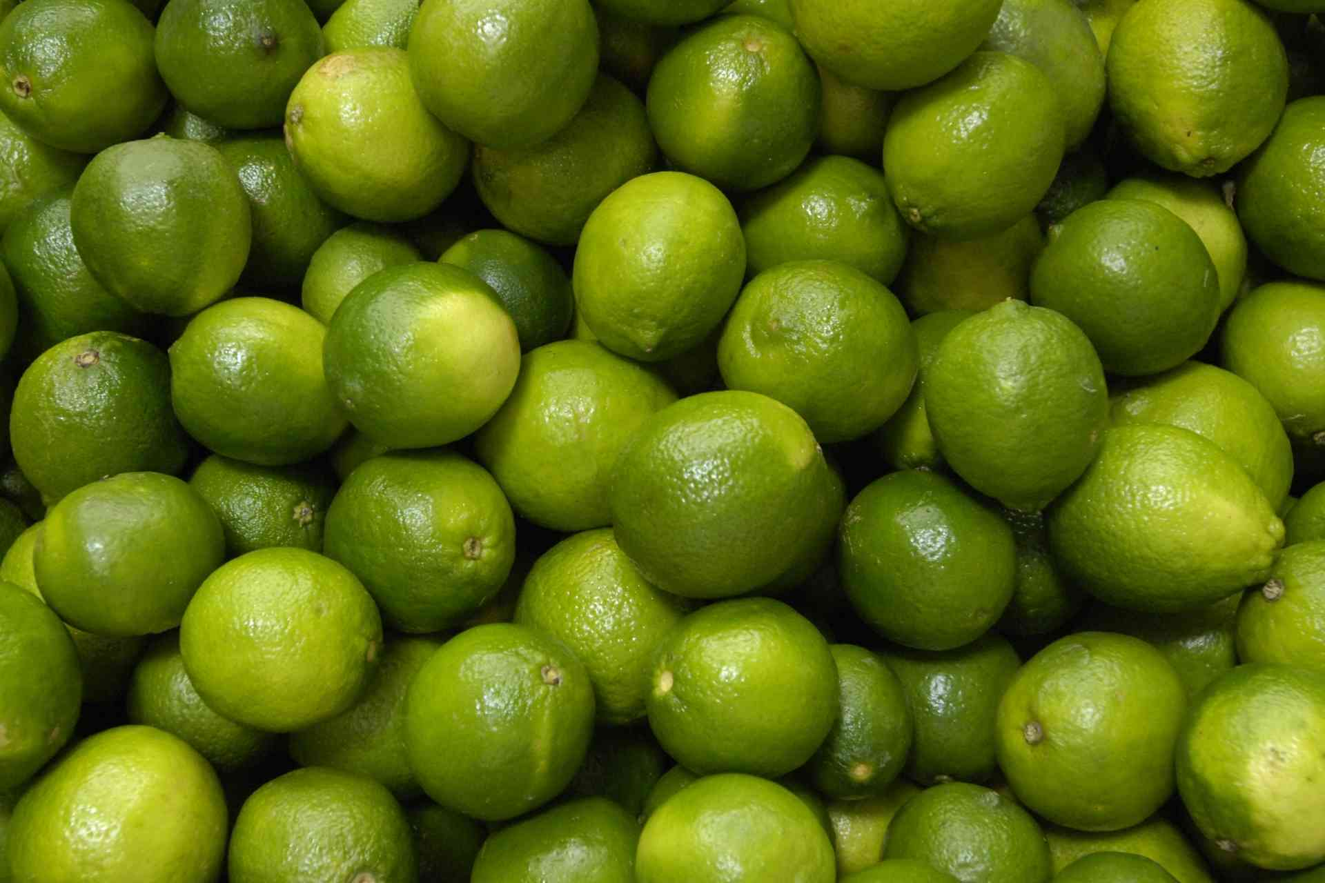 pianta di lime