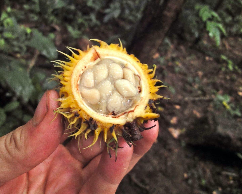 frutto strano