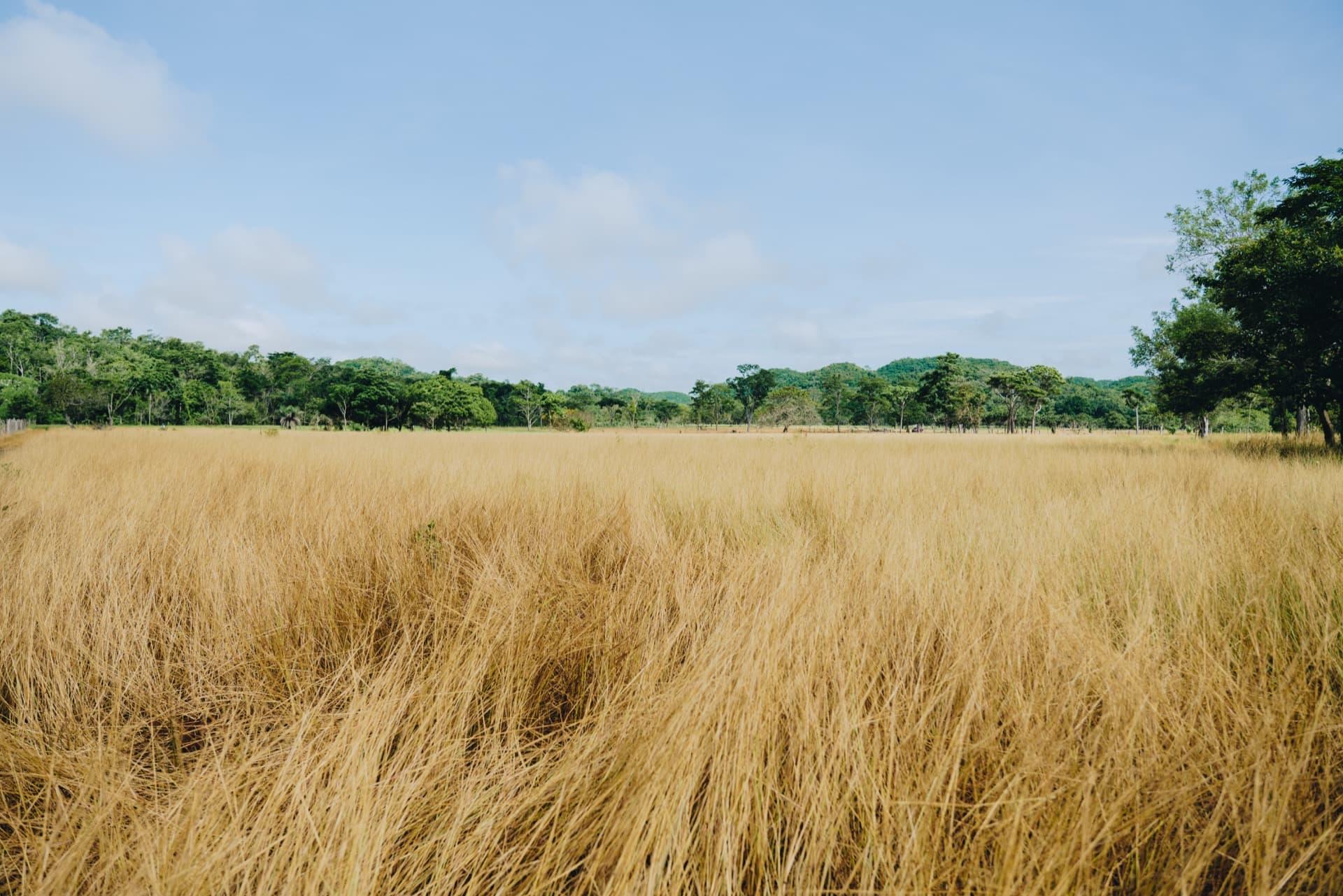 Supports reforestation plans worldwide