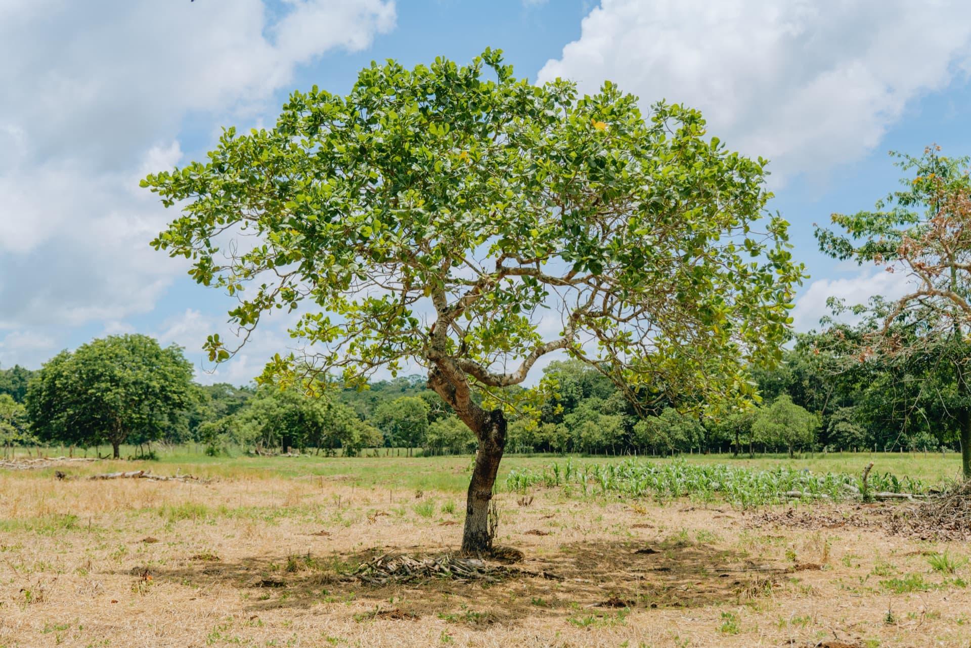 Cada árvore tem um código que se pode dar