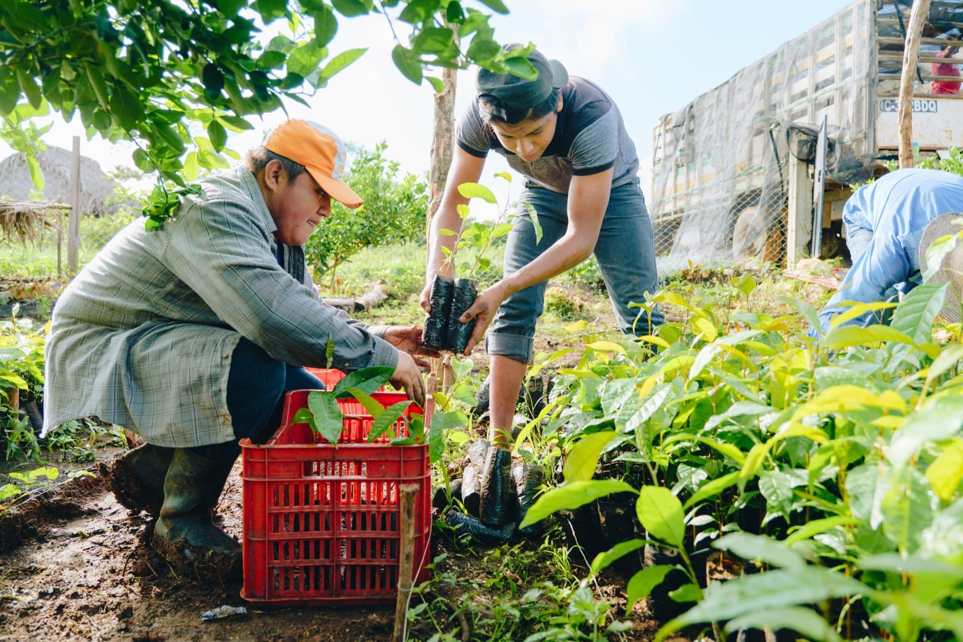 Sustainability at 360 degrees: environmental and social