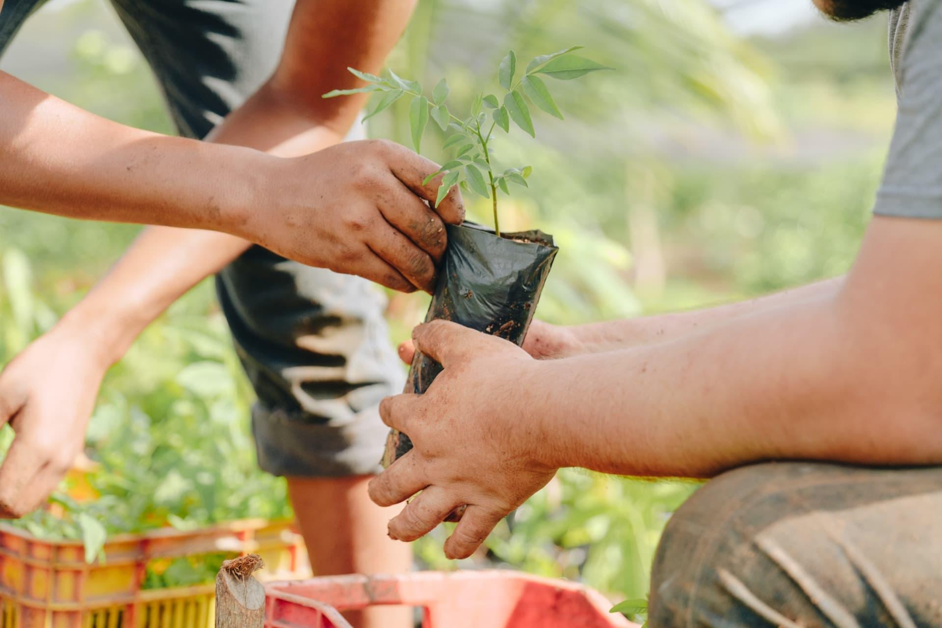 Nous donnons chaque arbre aux communautés paysannes