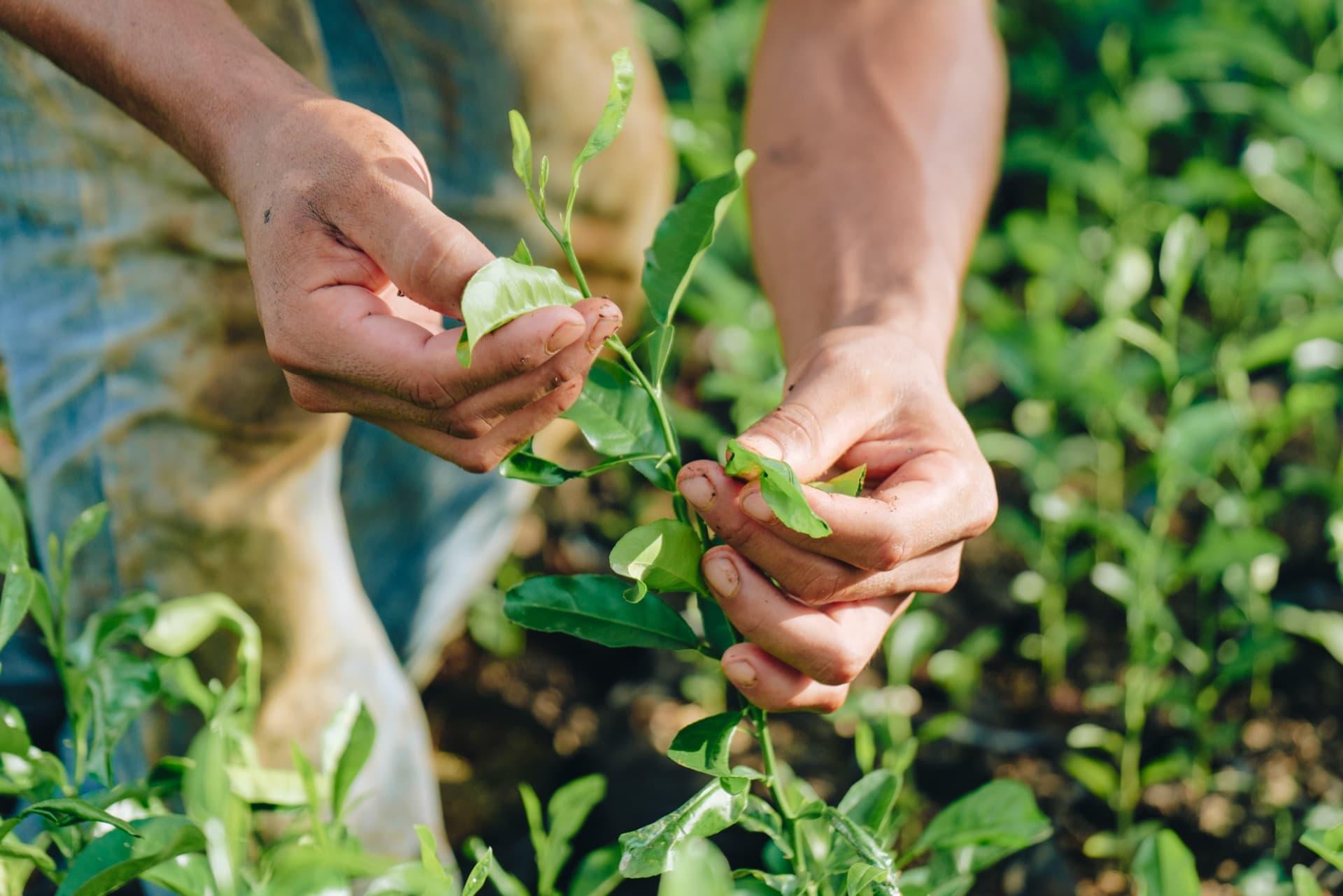 Curiamo la crescita di ogni singolo albero