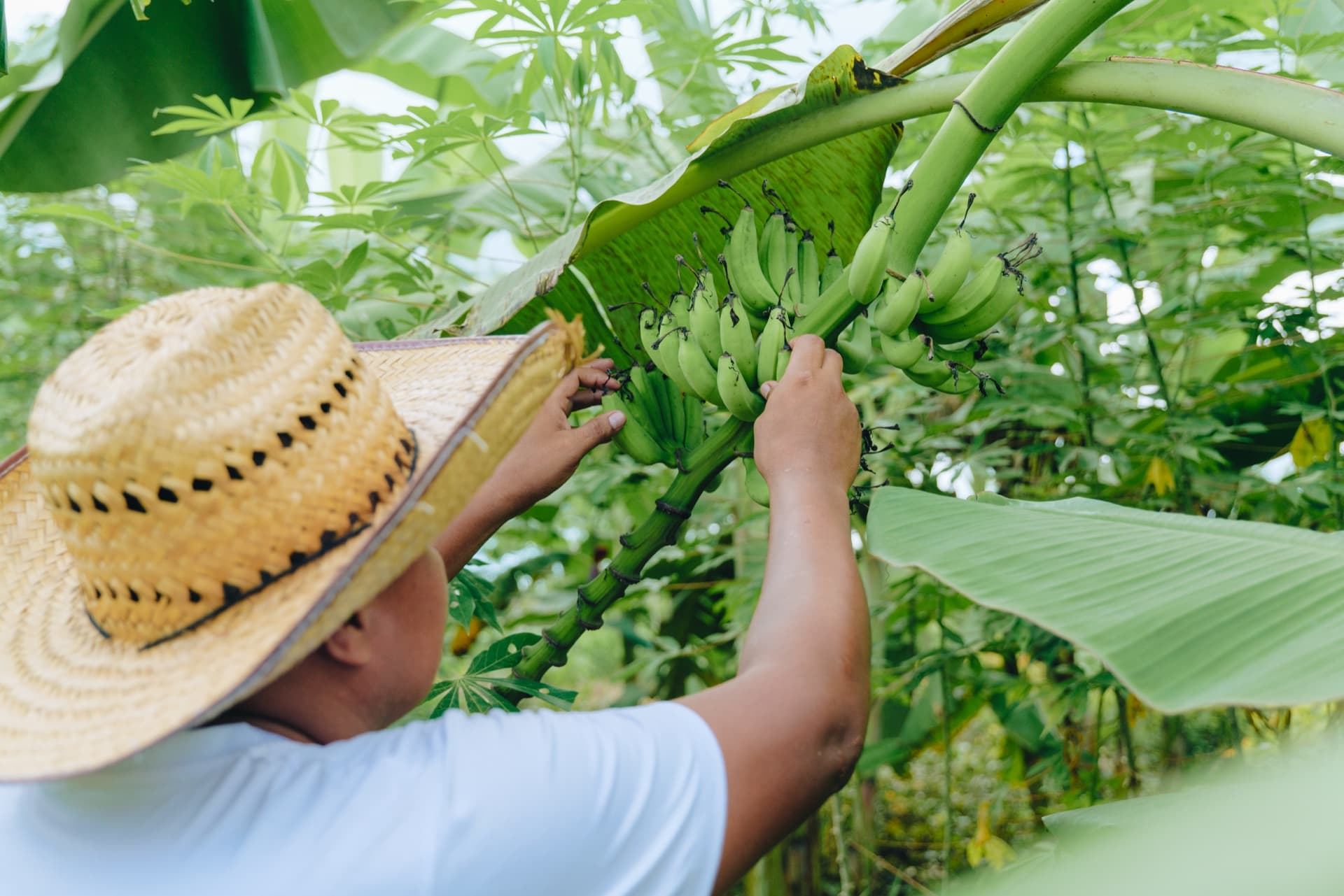 The fruit produced generates food security and economic support