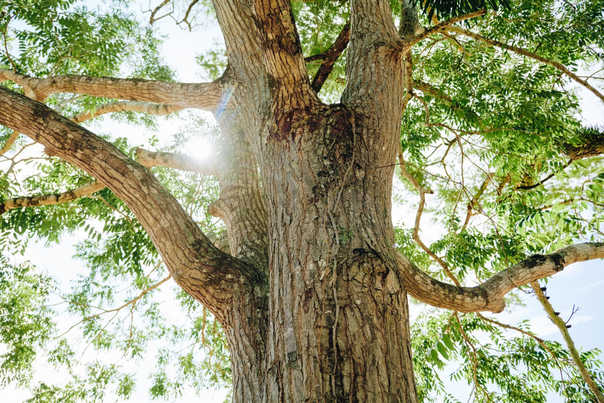 Compensates CO2 by planting trees