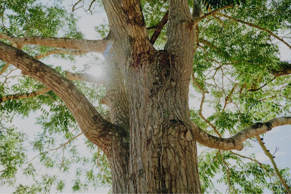 Un arbre compense le CO2