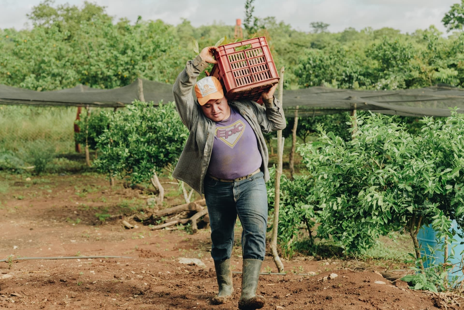 Neri move uma caixa de plantas