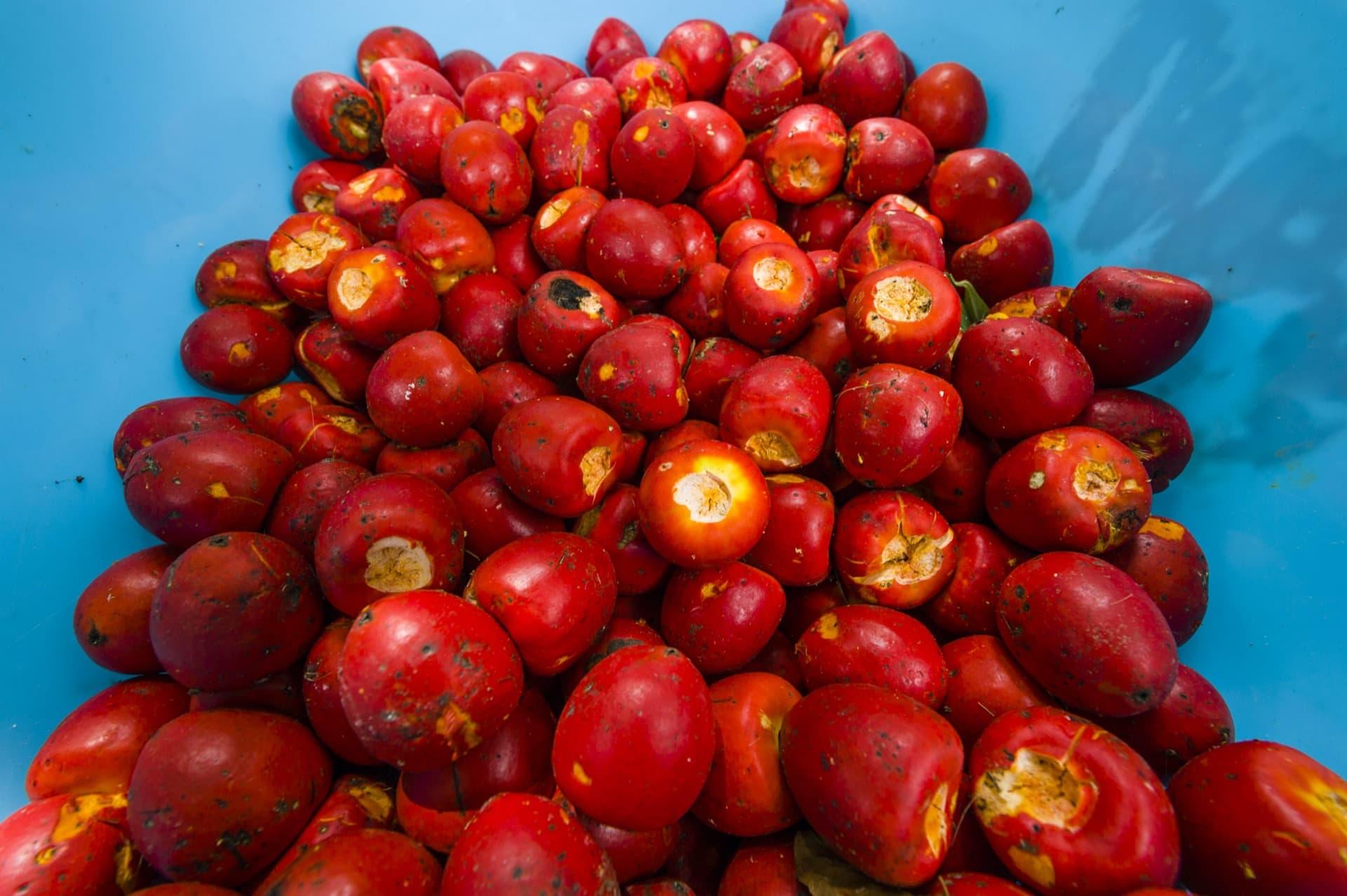 frutti impronunciabili